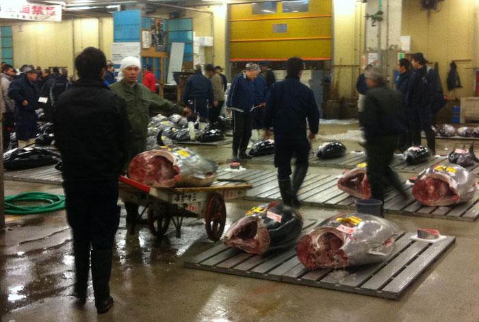 Interior de la subasta de atunes en el Mercado de Tsukiji