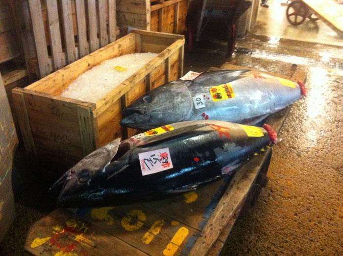 Atunes rojos en el Mercado de Tsukiji