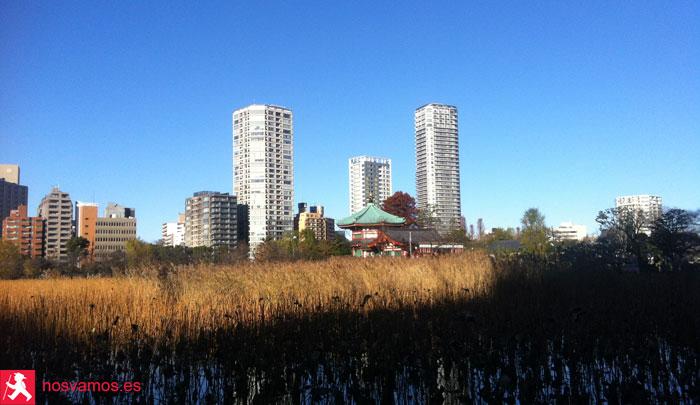 Lo mejor para aprovecha la mañana, irse a correr por Ueno Park y ver esto