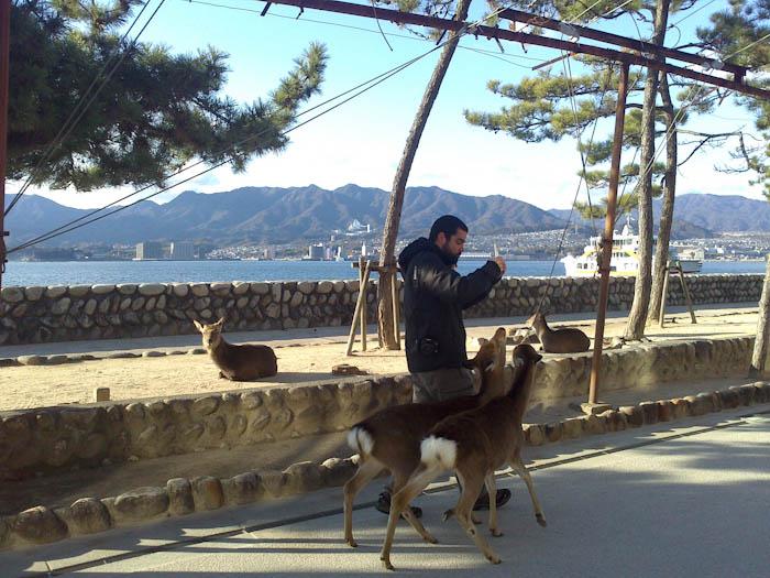 Los bonitos ciervos de antes, ahora me intentan -y lo consiguen- robar la comida