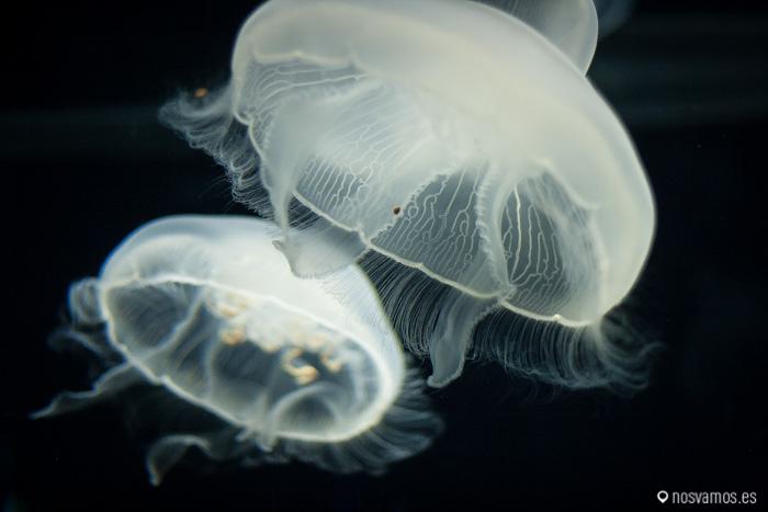 Espectacular el movimiento de las medusas