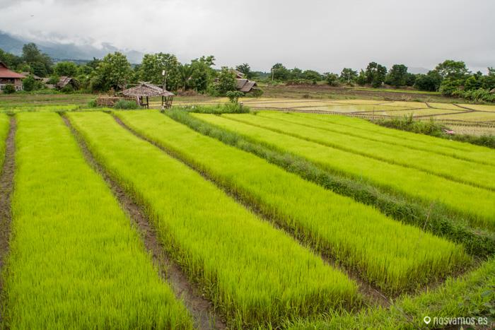 Campos de arroz en los alrrededores de Pai