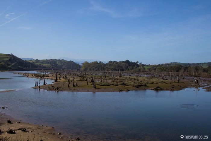 Bosque fosilizado de Oyambre
