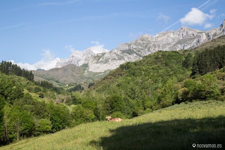 Los Picos de Europa desde Cabañes